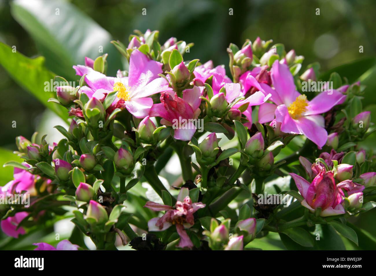 Pink Flowering Bushes Stock Photos Pink Flowering Bushes Stock