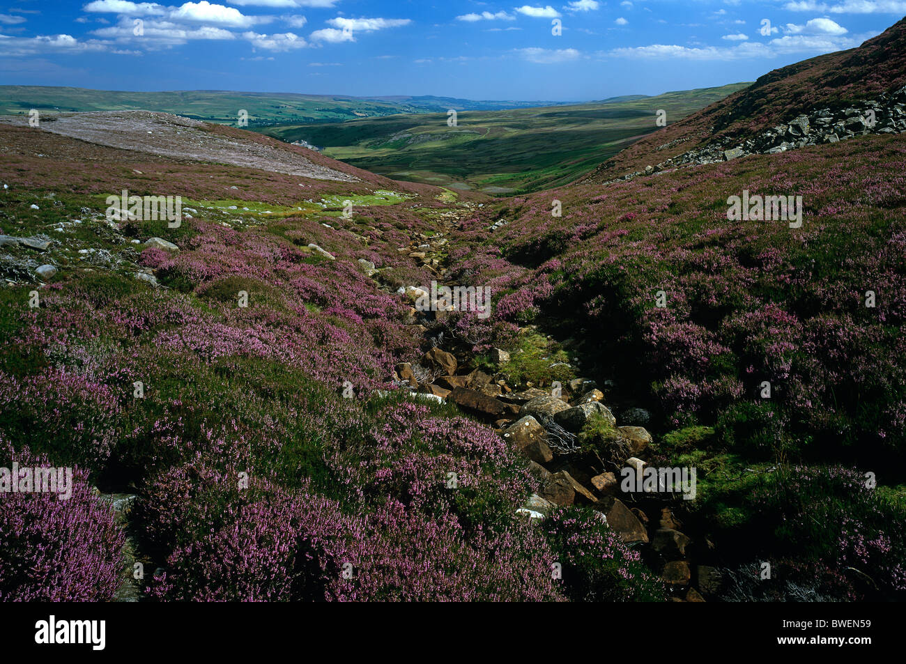 A view of Upper Teesdale in heather moorland near Langdon Beck, County Durham - Stock Image