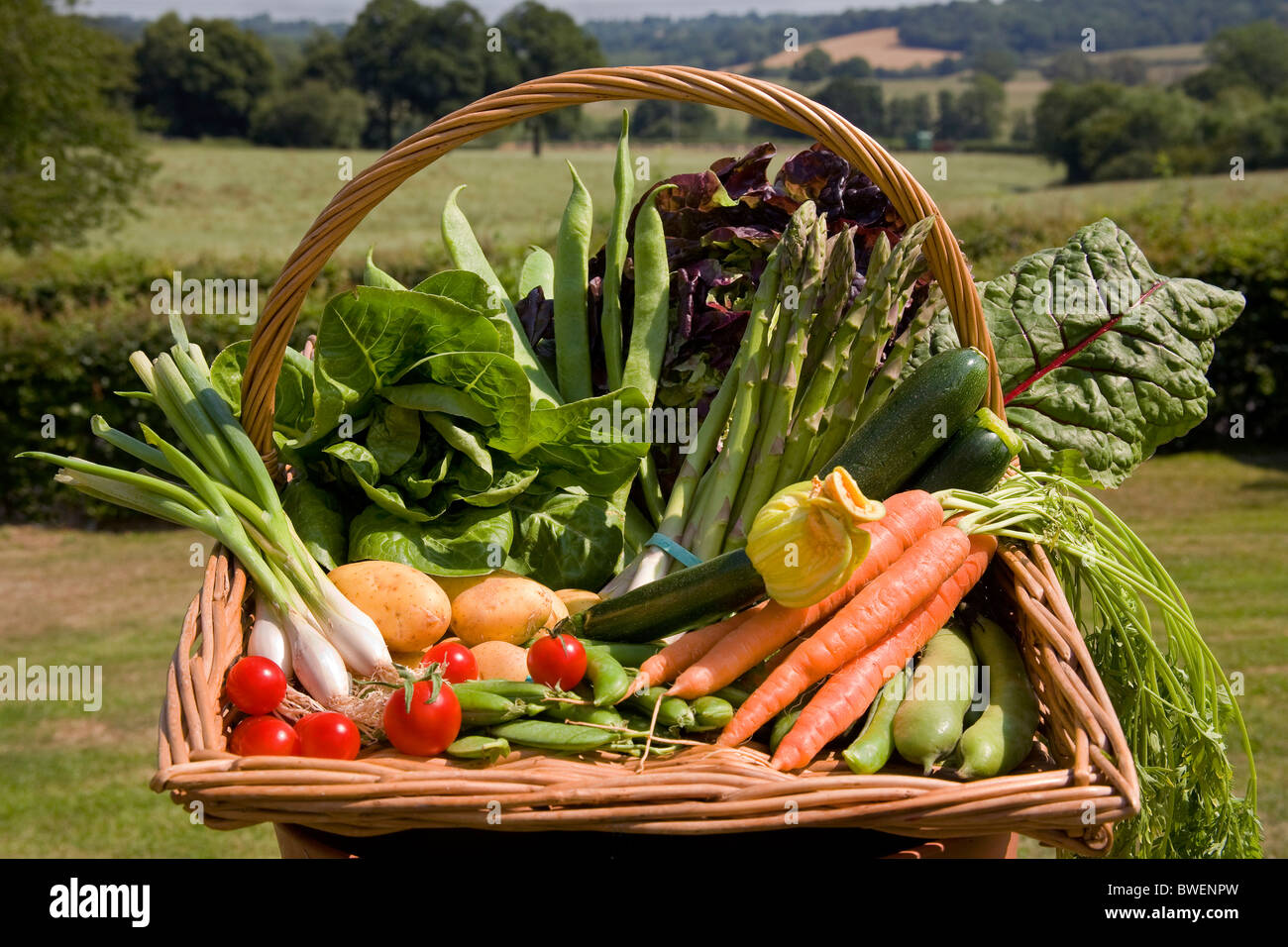 Colourful trug of locally grown British summer vegetables in countryside landscape fields woods valley in the Weald - Stock Image