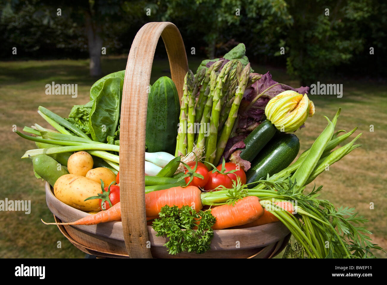 Colourful trug of locally grown freshly picked summer vegetables in country garden with trees in the Weald of Kent - Stock Image