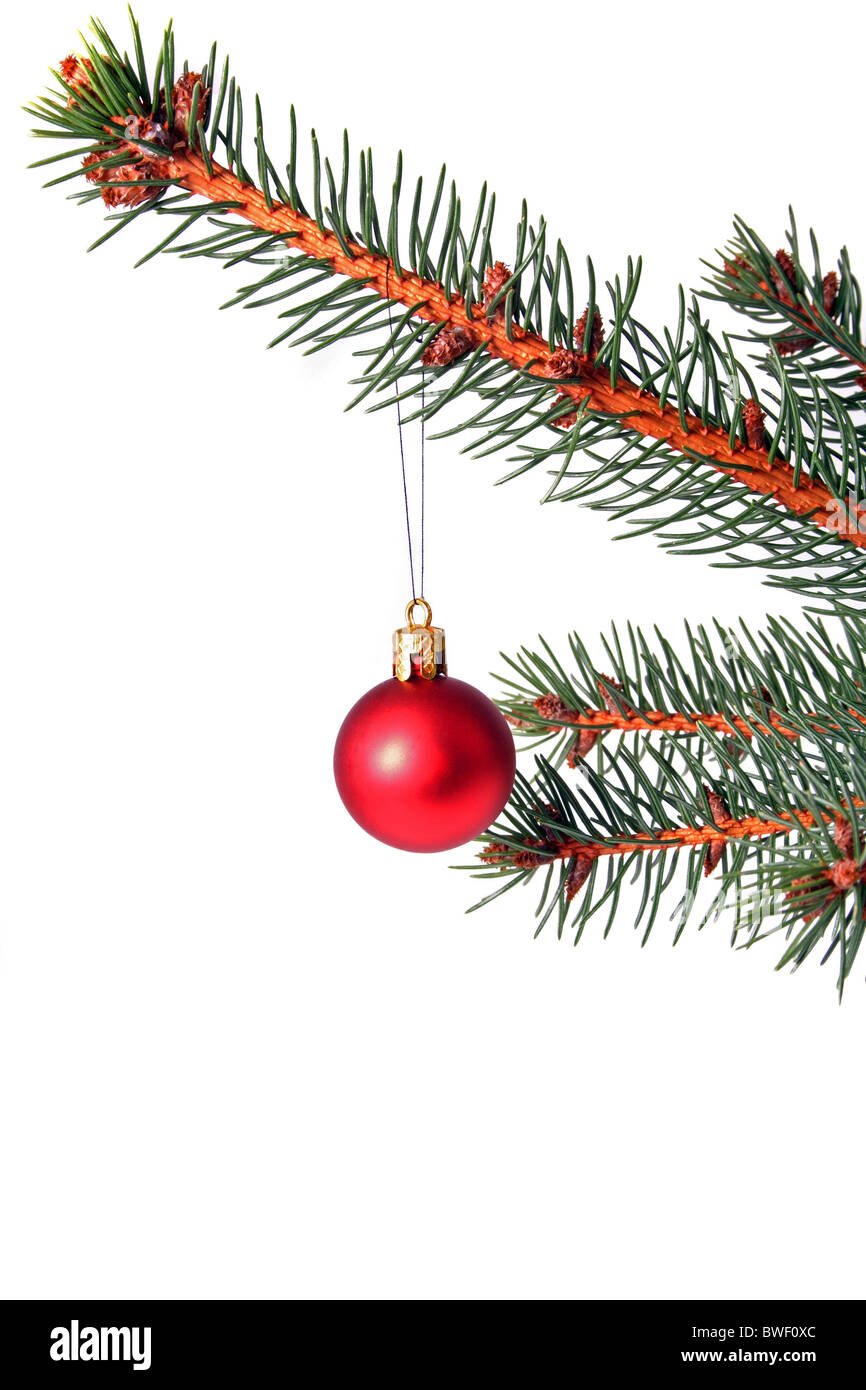 A twig of a christmas tree. All isolated on white background. - Stock Image