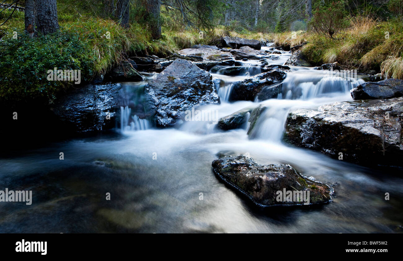 A clean stream in a deep intact forest,Dalarna,Sween - Stock Image