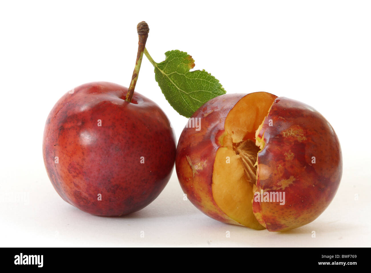 Three fresh plums on white background - one opened Stock Photo