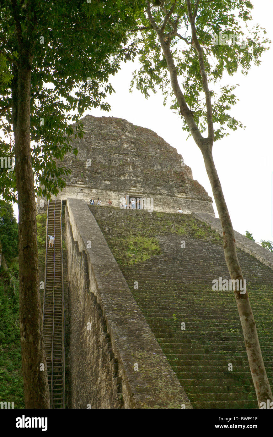 Temple V at the Maya ruins of Tikal, El Peten, Guatemala. Tikal is a UNESCO World Heritage Site. - Stock Image