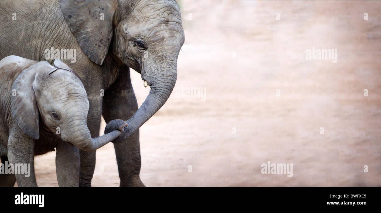 Mother with baby elephant (Loxodonta africana), Kruger National Park, Mpumalanga Province, South Africa - Stock Image