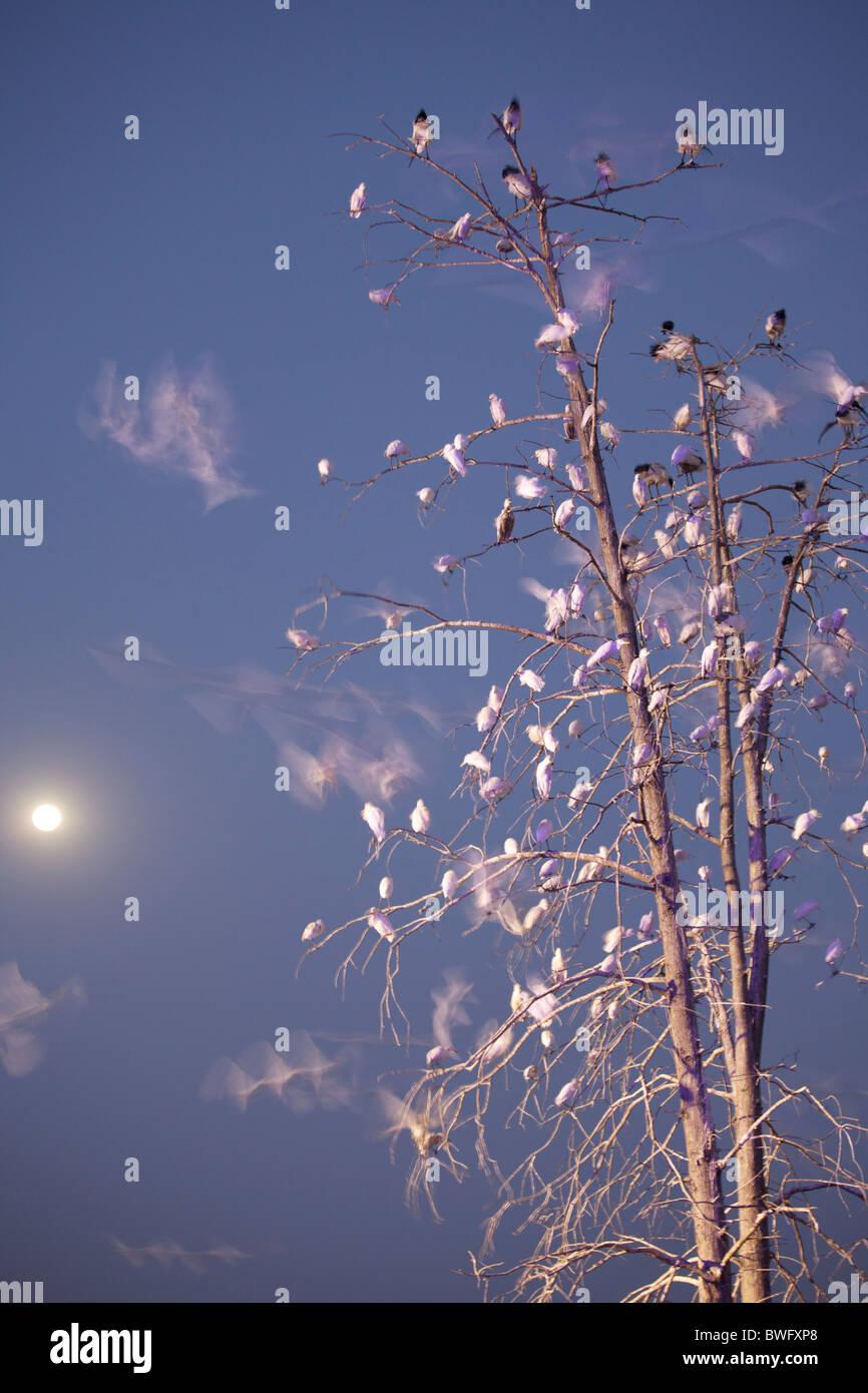 Waterbirds tree sanctuary, Kwazulu-Natal, Pietermaritzburg, South Africa - Stock Image