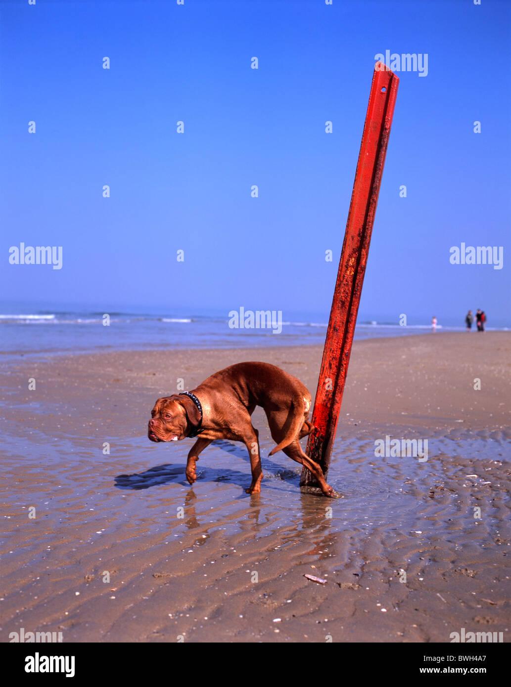 Beach peeing Category:Bottomless women
