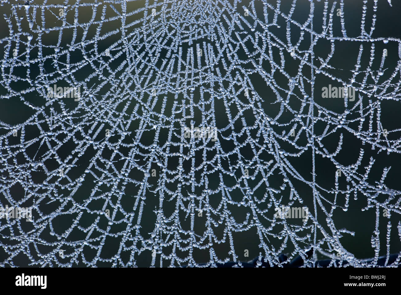 Spiders Web in frost on wire fence - Stock Image