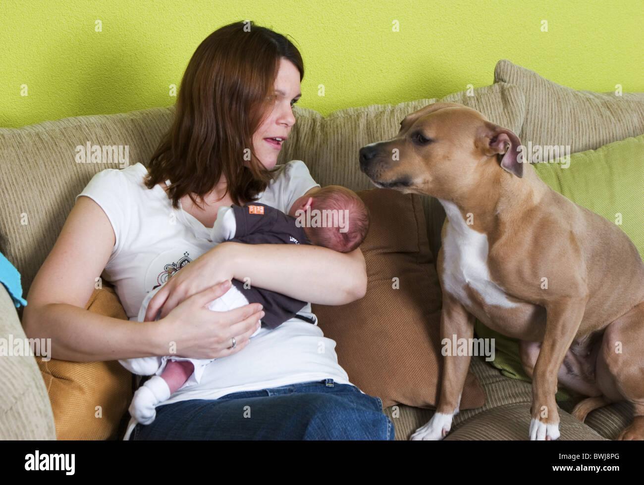 Mother newborn baby warning dog - Stock Image