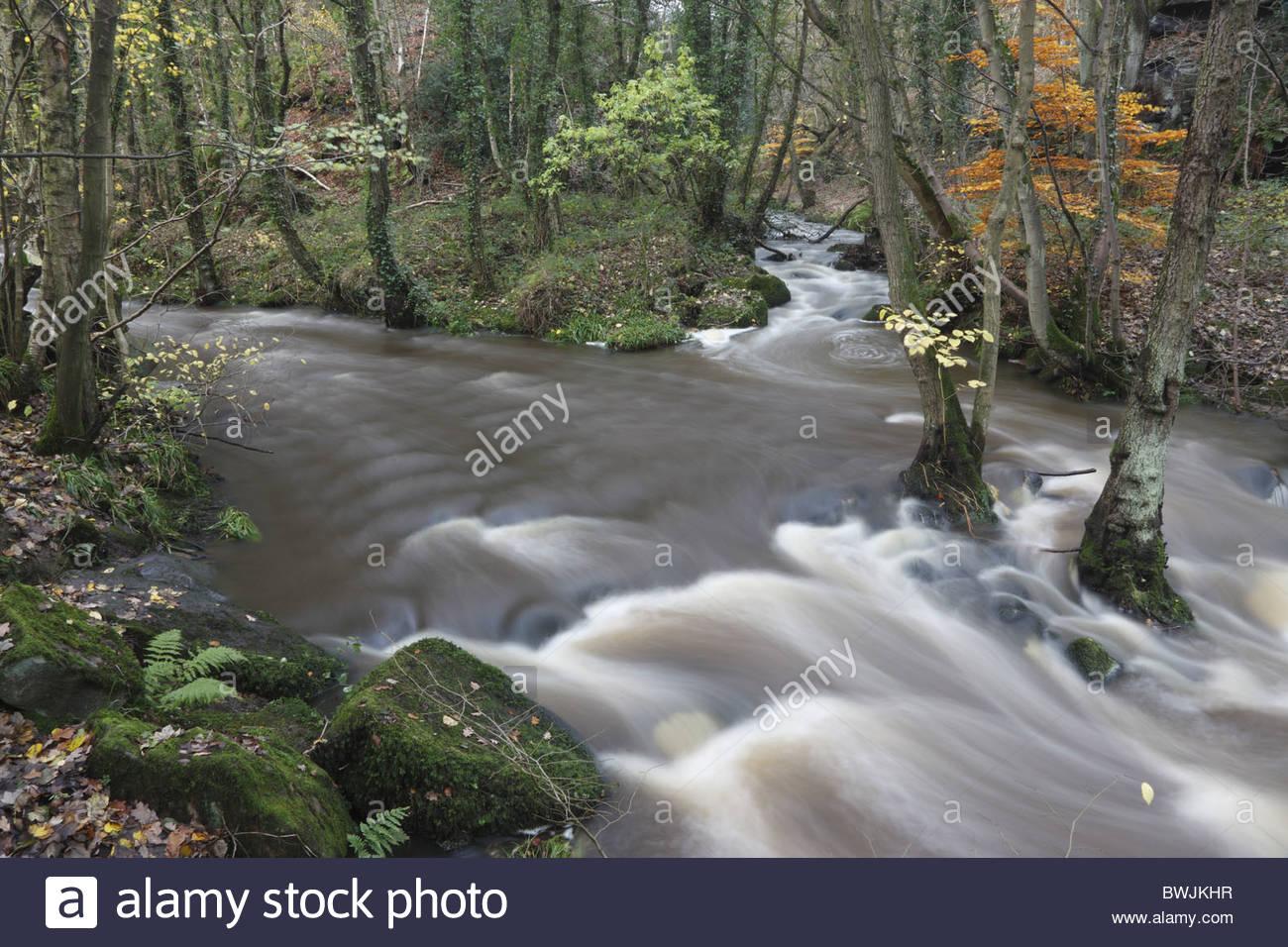 Stream confluence Goit Stock Wood Harden West Yorkshire England Stock Photo