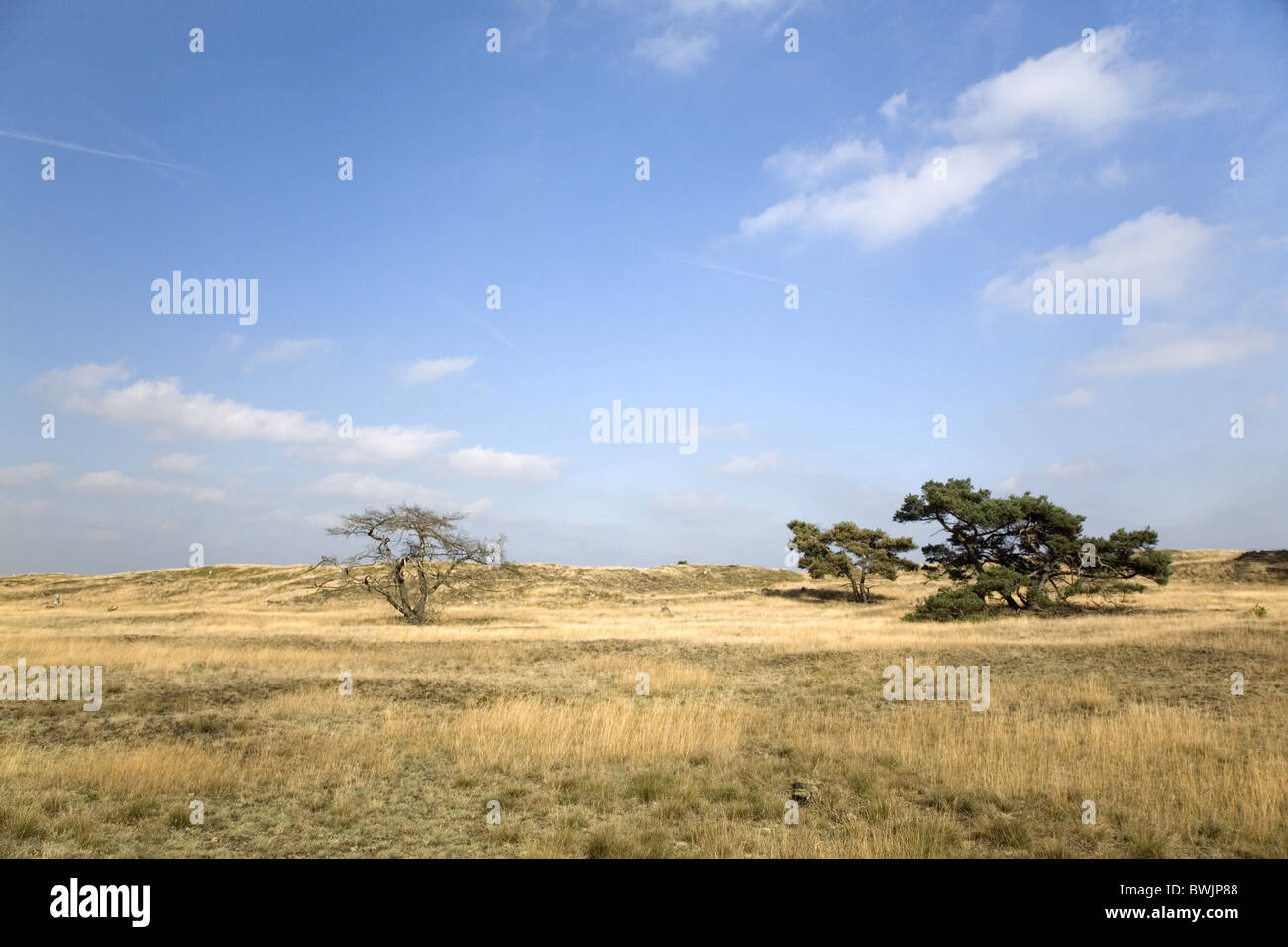 Landscape of the National Park Hoge Veluwe, Gelderland, Netherlands - Stock Image