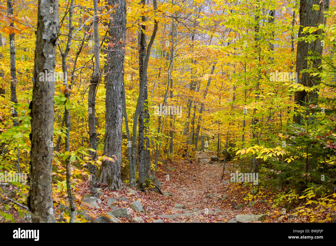 autumn autumn wood inside path way footpath deciduous forest trees Arethusa Falls Trail Crawford Notch State Stock Photo