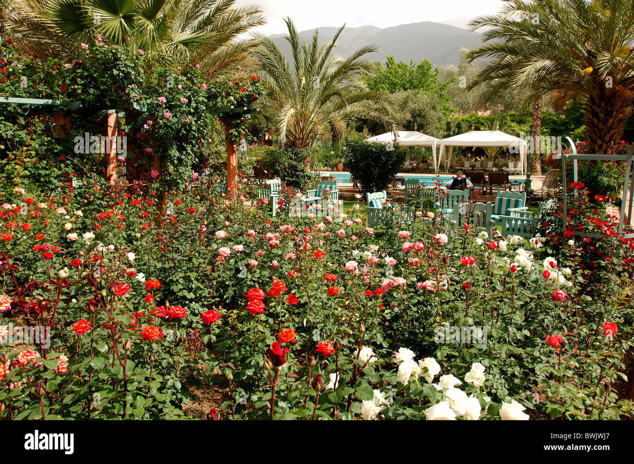 Good Hotel Domaine De La Roseraie Outside Garden Flowers Palms Tourism Douia  Crudely Ouirgane Morocco Africa North Africa
