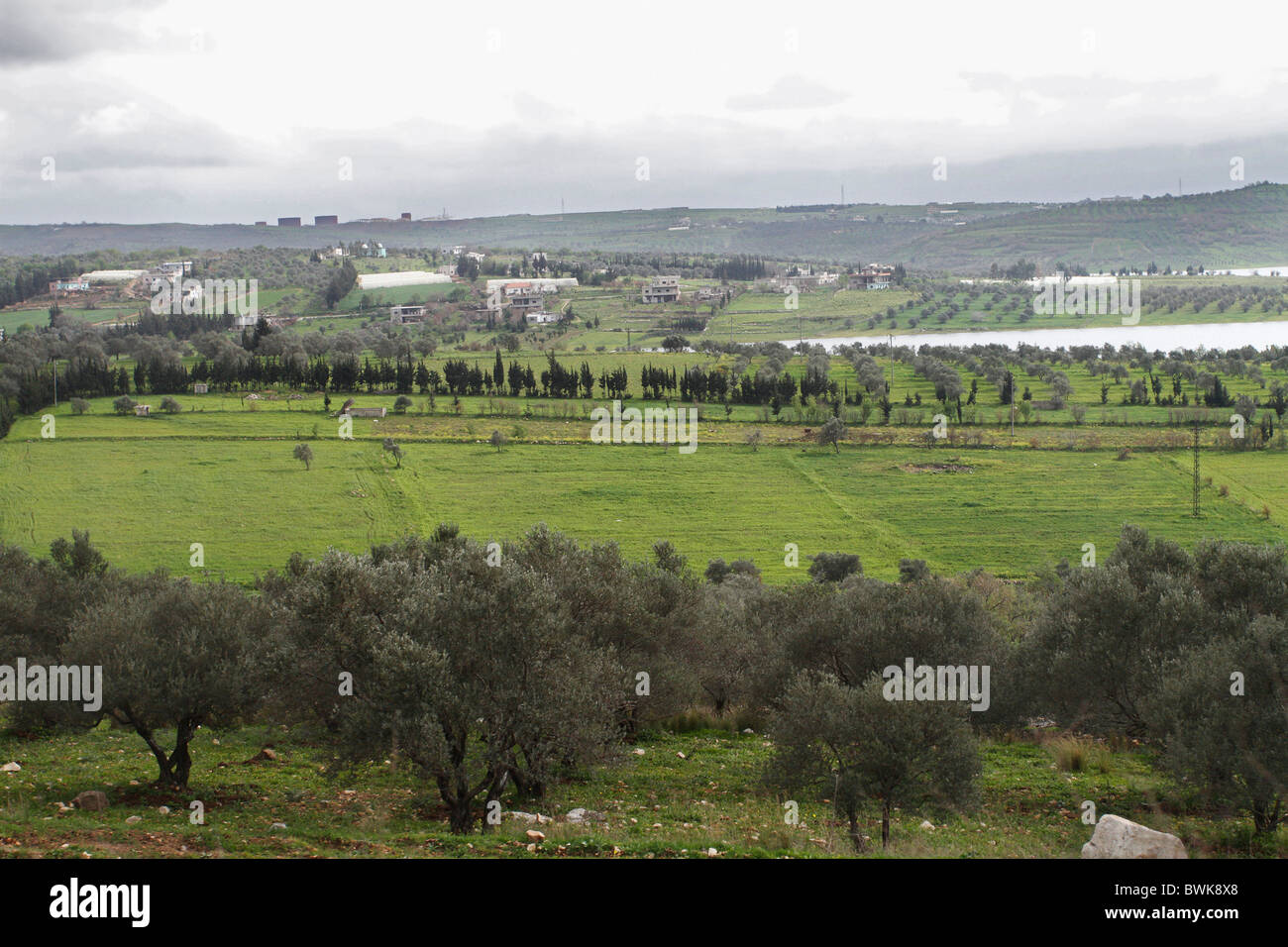 Fertile land and Olive trees near Homs in Syria. - Stock Image