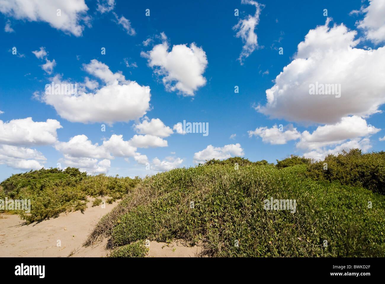 Capalbio Beach, Capalbio, Grosseto Province, Tuscany, Italy - Stock Image