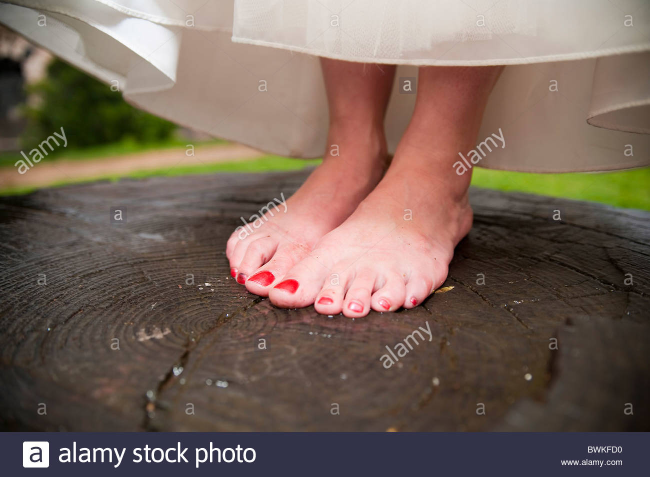 Bride standing on a tree trunk barefoot in the rain - Stock Image
