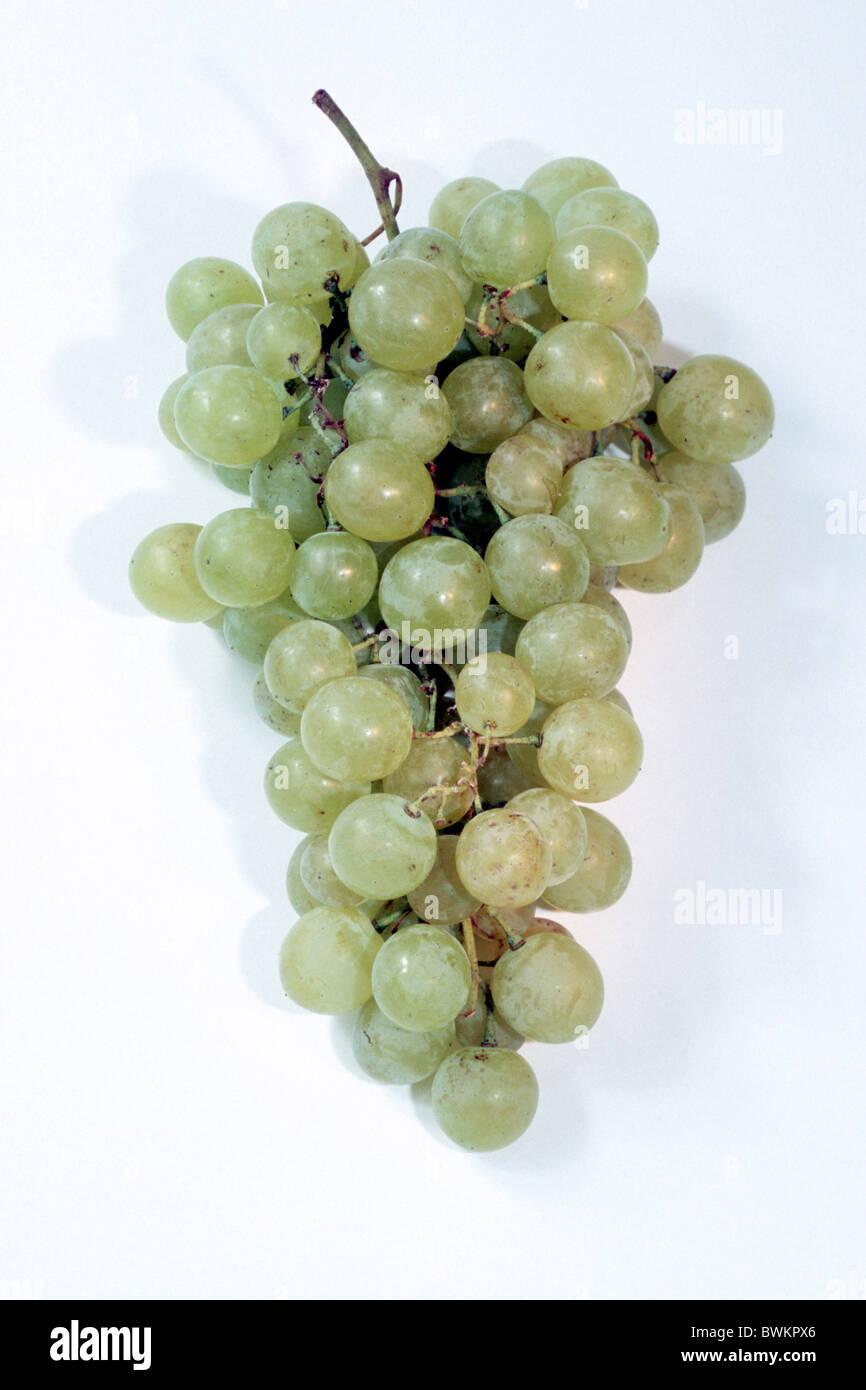 Grape Vine (Vitis vinifera), variety: Fanny, grape, studio picture. Stock Photo