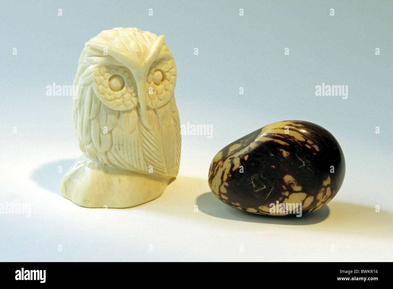 Ivory and vegetable ivory, the nut of the Ivory Palm (Phytelephas macrocarpa), studio picture. - Stock Image