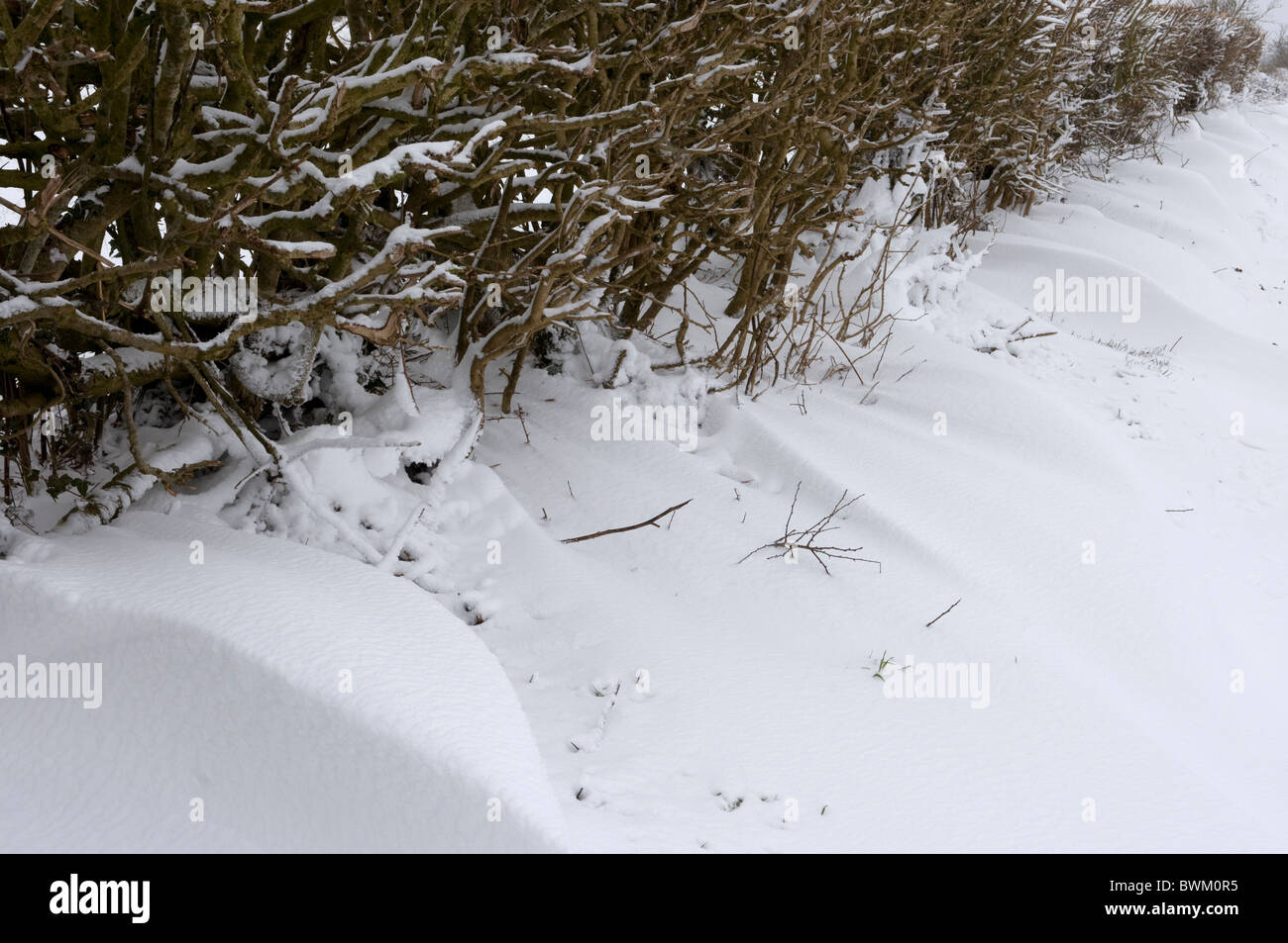 Close up of a snowdrift at the bottom of a hedge - Stock Image