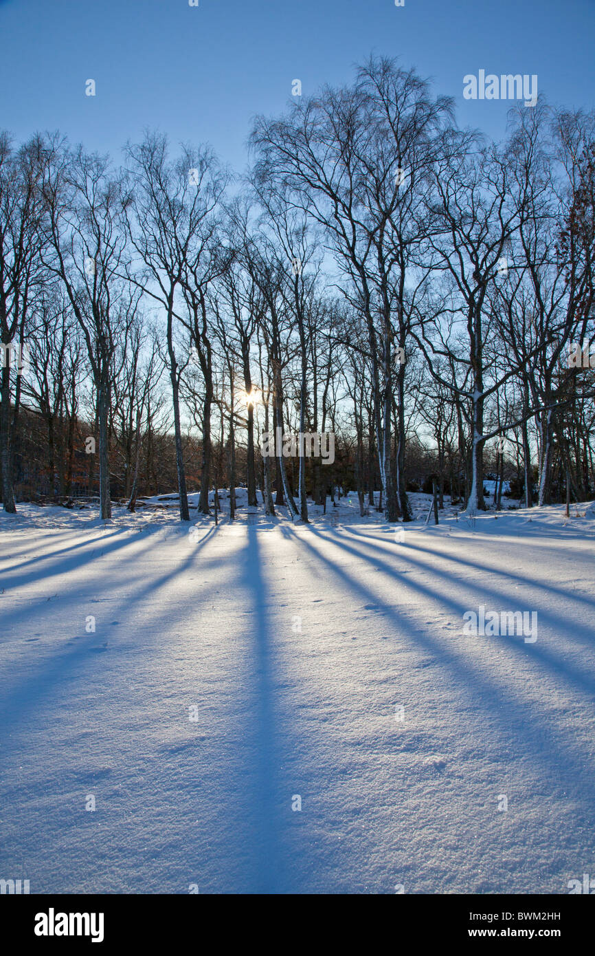 Silhouetted trees casting long shadows on a snowy field Stock Photo