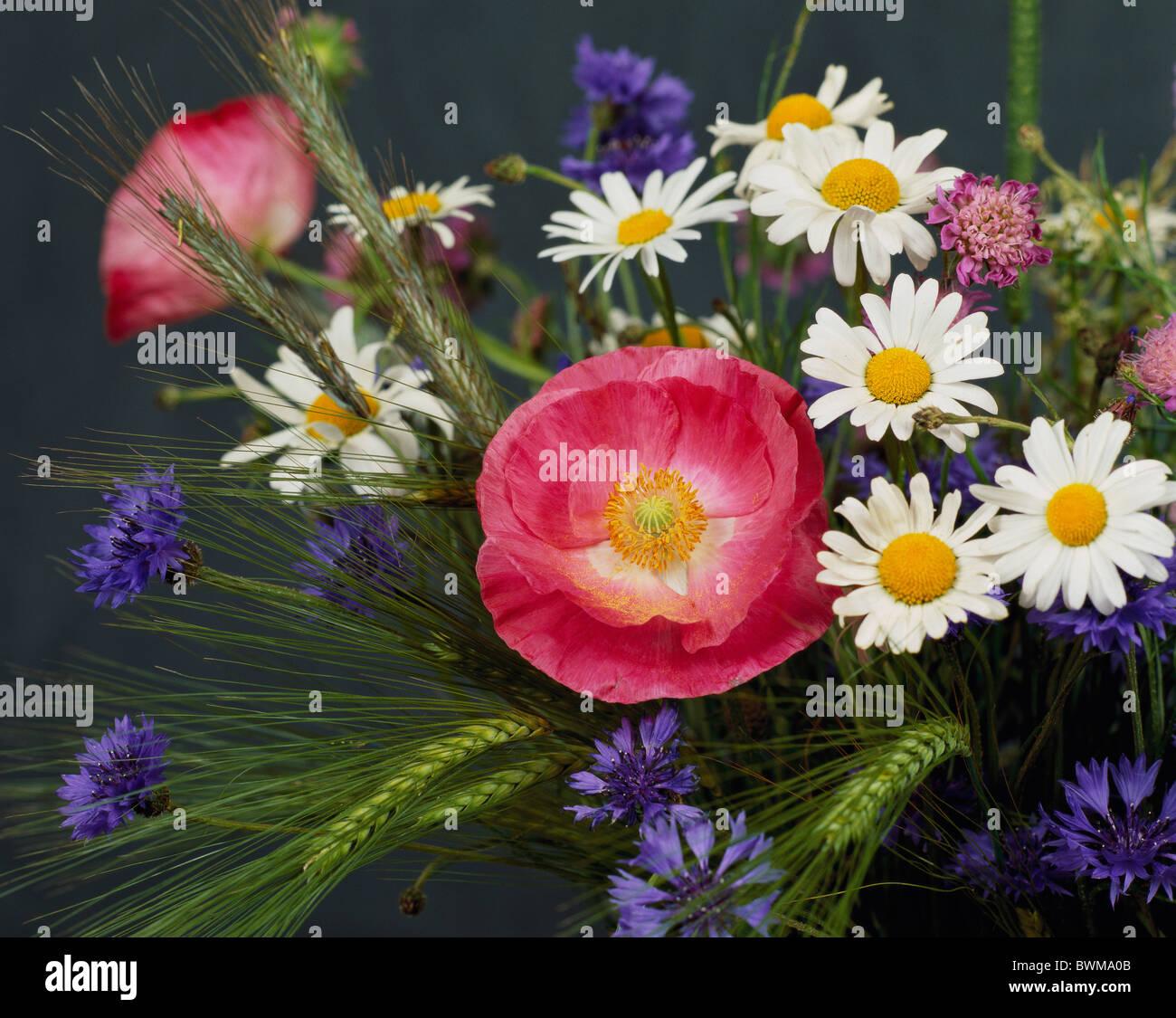 flowers bouquet meadow flowers cornflowers corn poppy poppy Stock ...