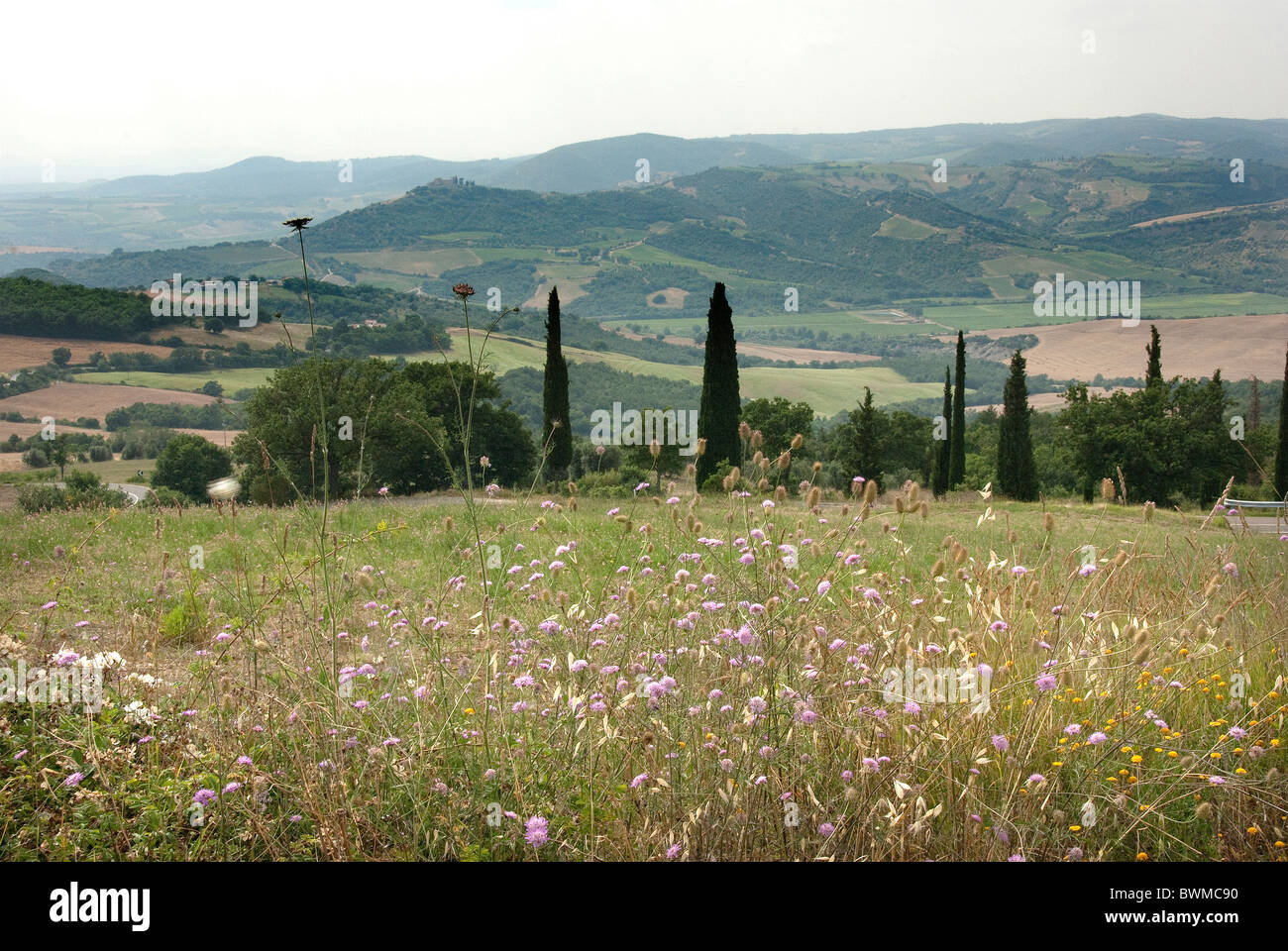 meadow near Monte Amiata maremma grosseto province - Stock Image