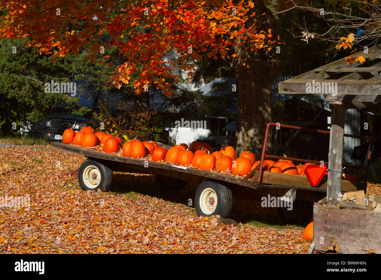Flatbed Truck Trailer With Pumpkins For Sale In Rural Southern Stock Photo 33029325 Alamy