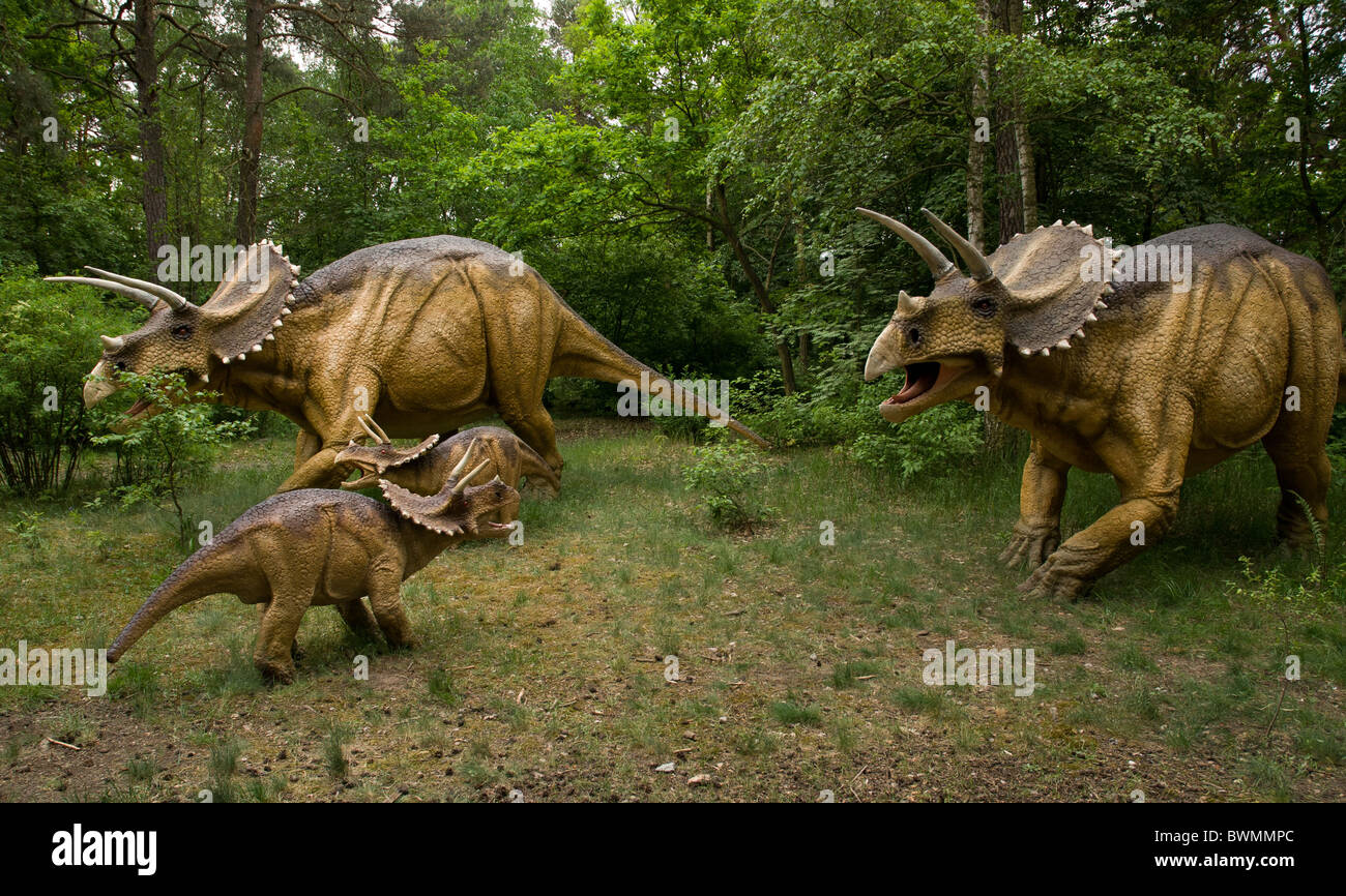 Dinosaur - three dinosaurs Zuniceratops in natural environment - Stock Image
