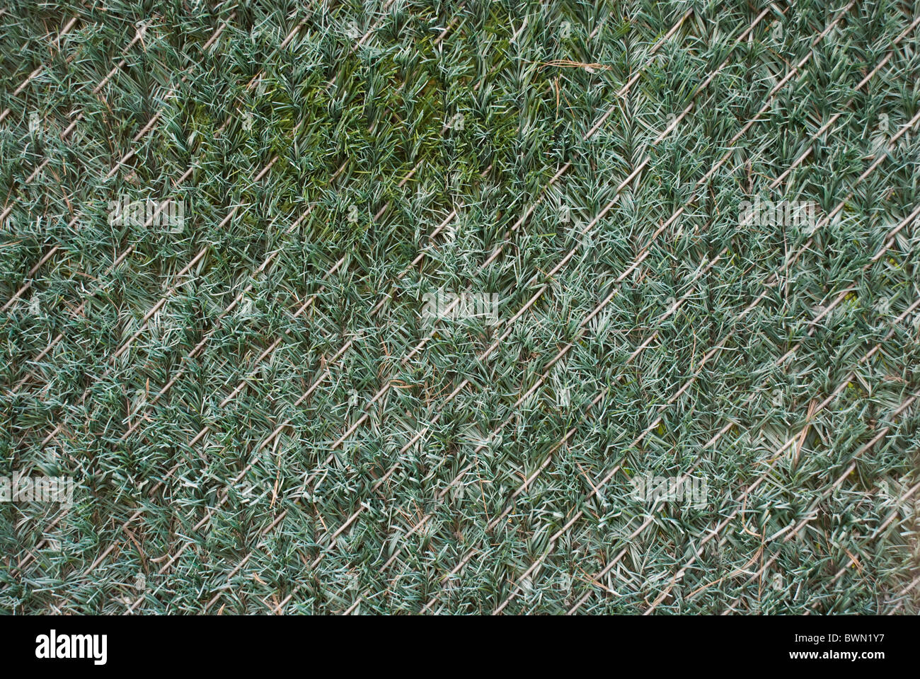 Artificial hedge fence material in chain link fence to obscure and beautify the scene or create privacy - Stock Image