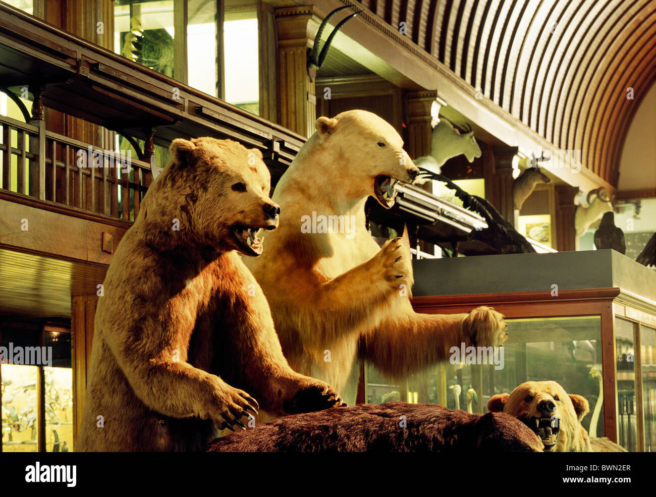 Victorian Taxidermy Stock Photos & Victorian Taxidermy Stock Images ...