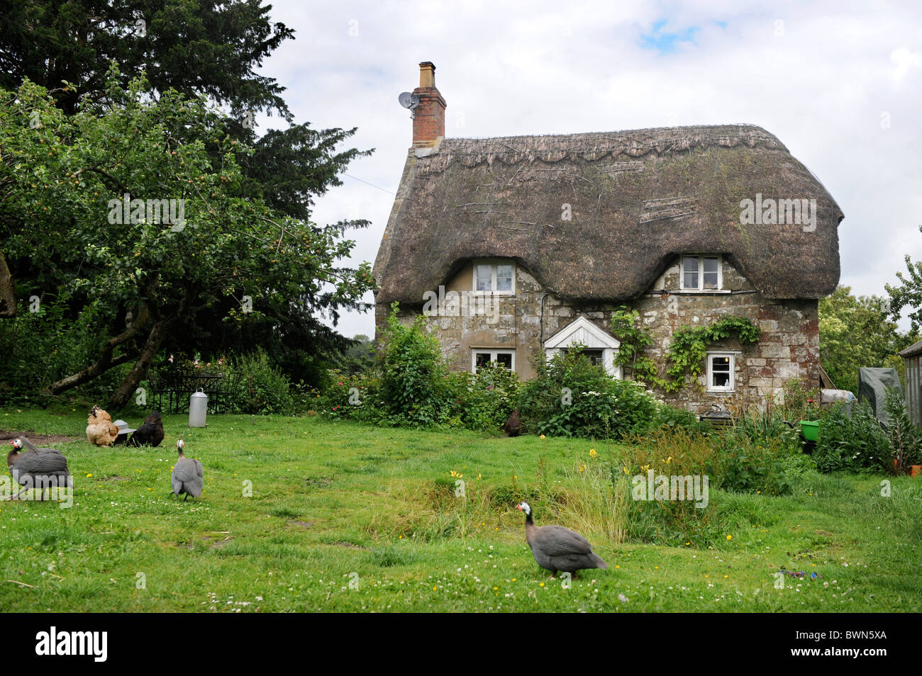 A thatched cottage with chickens in the garden Wiltshire, UK - Stock Image