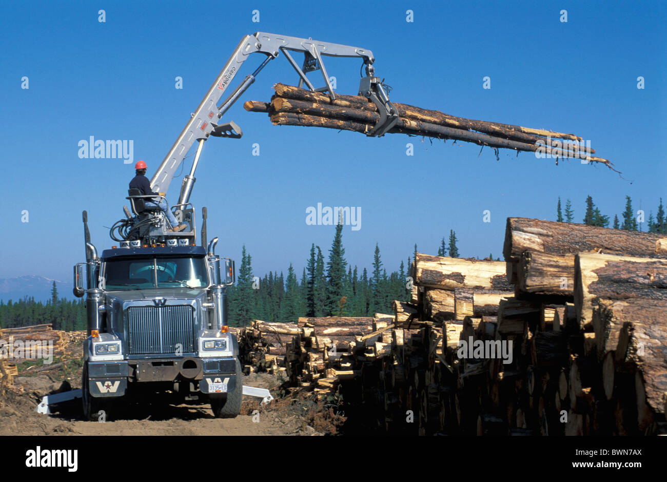 Canada North America America Chilcotin Country British Columbia forest coniferous forest stubbed eradication Stock Photo
