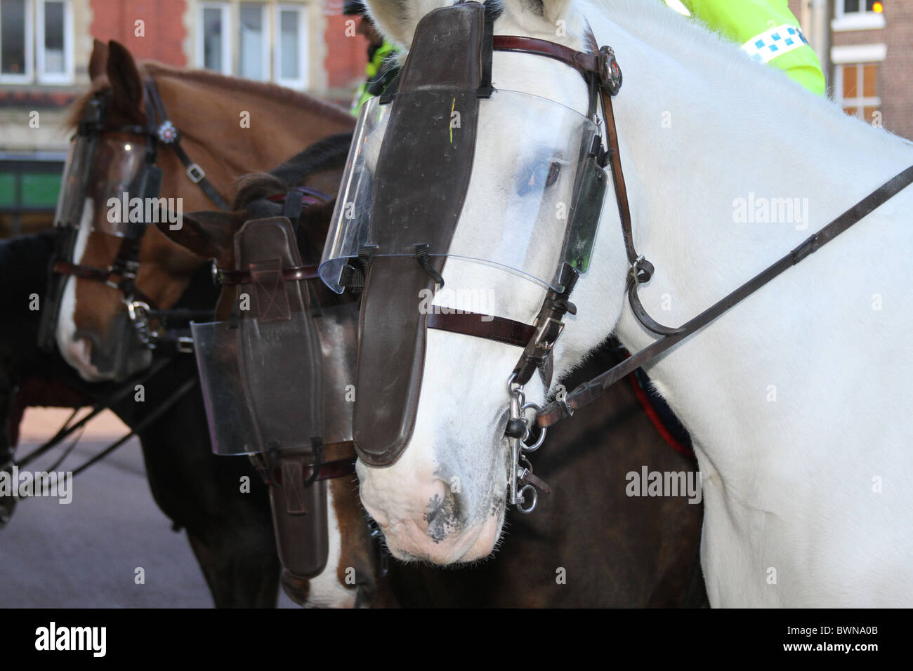 Mounted Police Horses In Riot Gear At Demonstrations In Preston Town Stock Photo Alamy