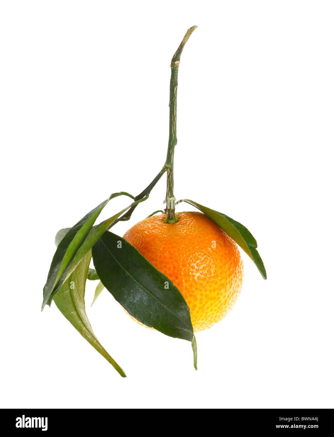mandarin orange with leaves, isolated - Stock Image