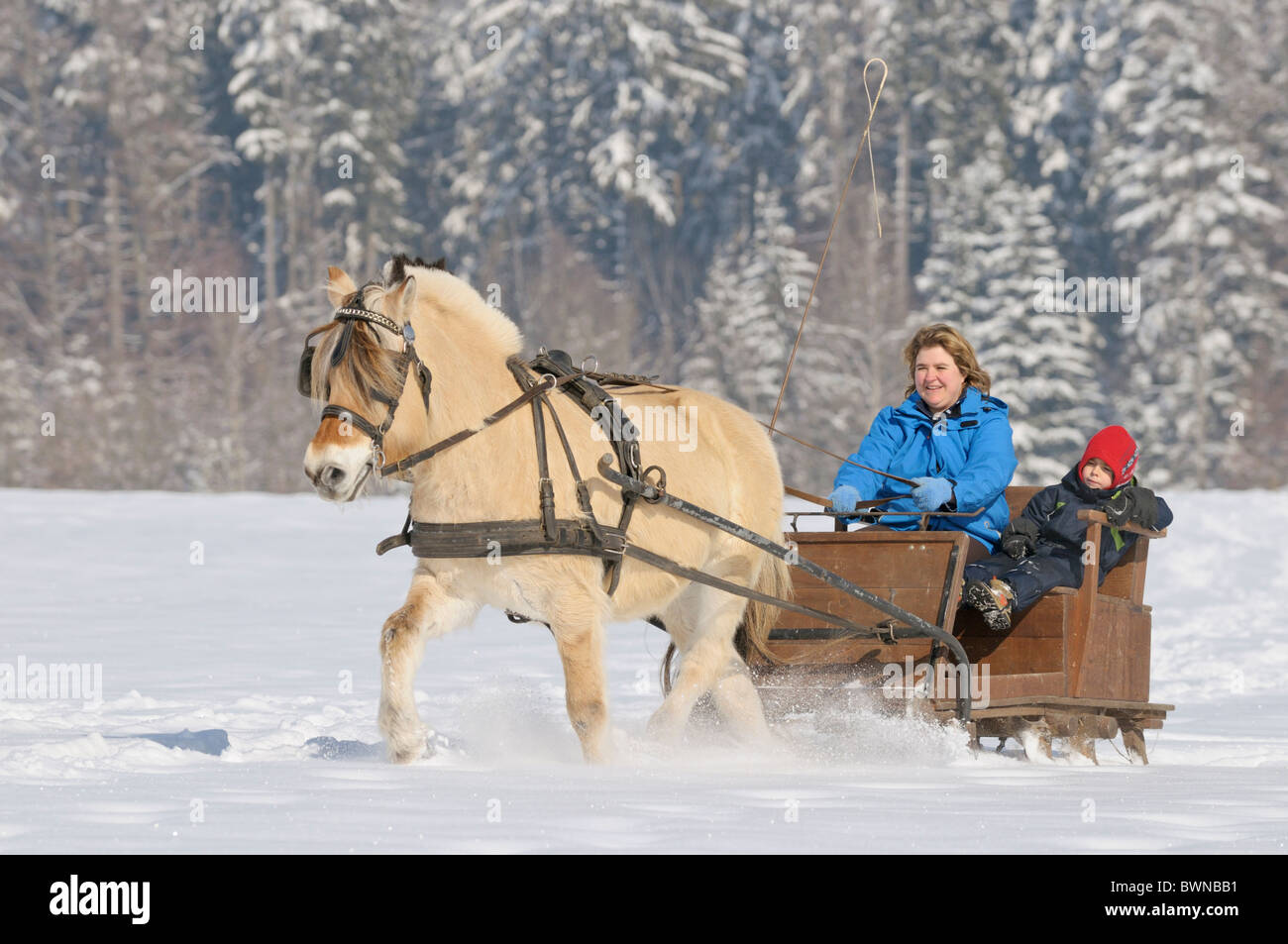 Mother and son in a horse sleigh drawn by a Norwegian horse - Stock Image