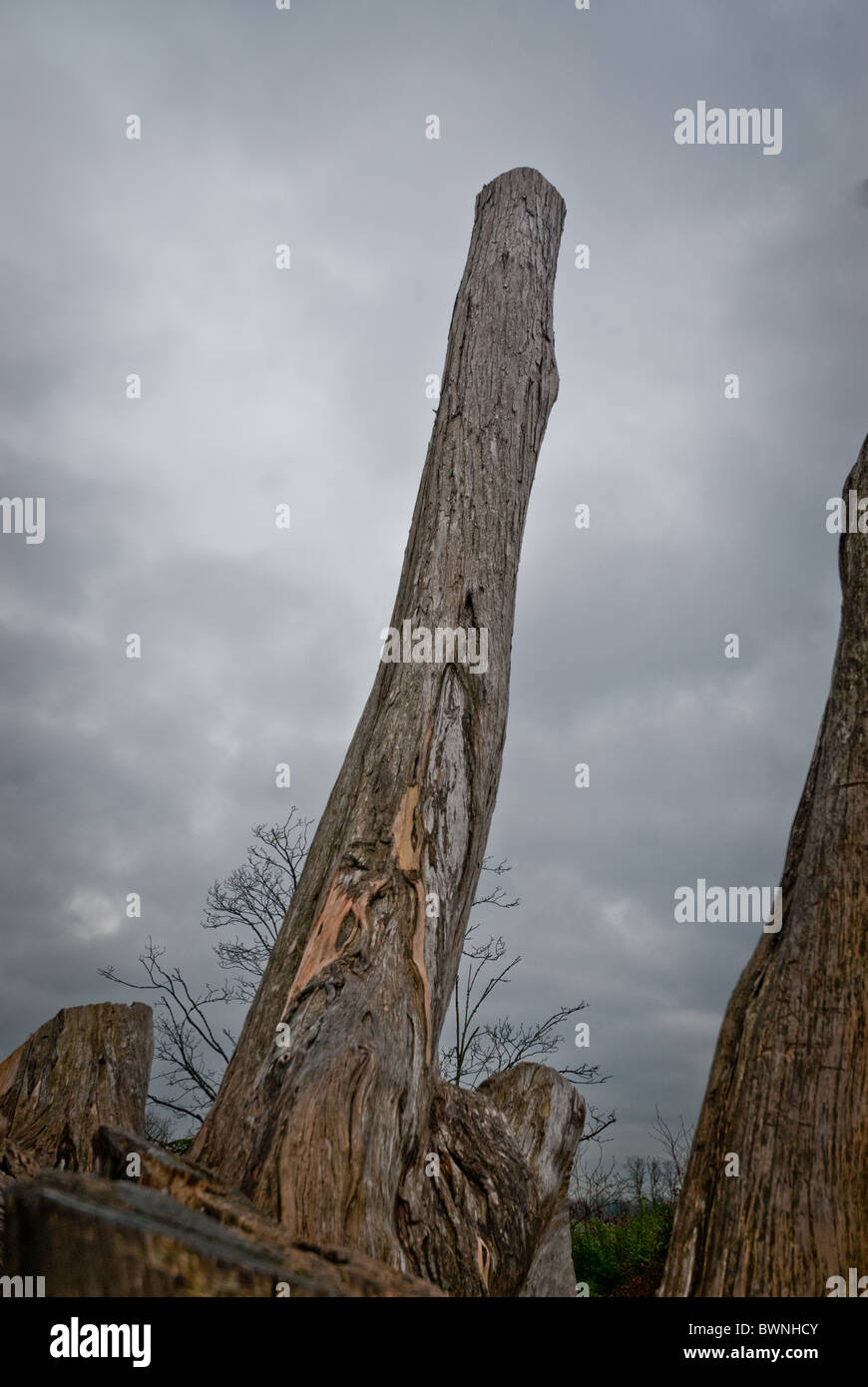 Barren tree against a gray sky - Stock Image