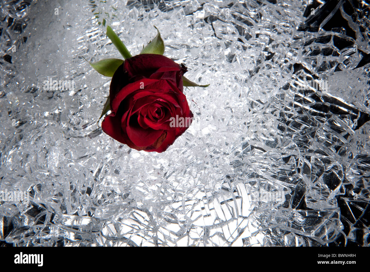 heartsickness  rose with cullet - Stock Image