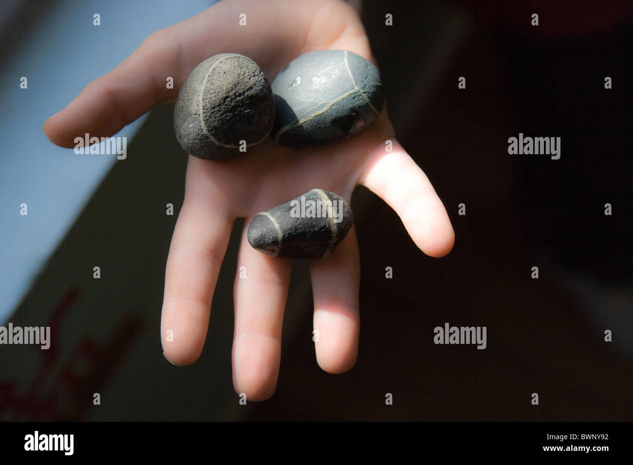 child's hand holding three striped river rocks - Stock Image