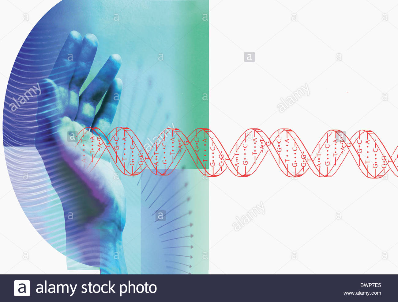 Hands stopping DNA helix - Stock Image