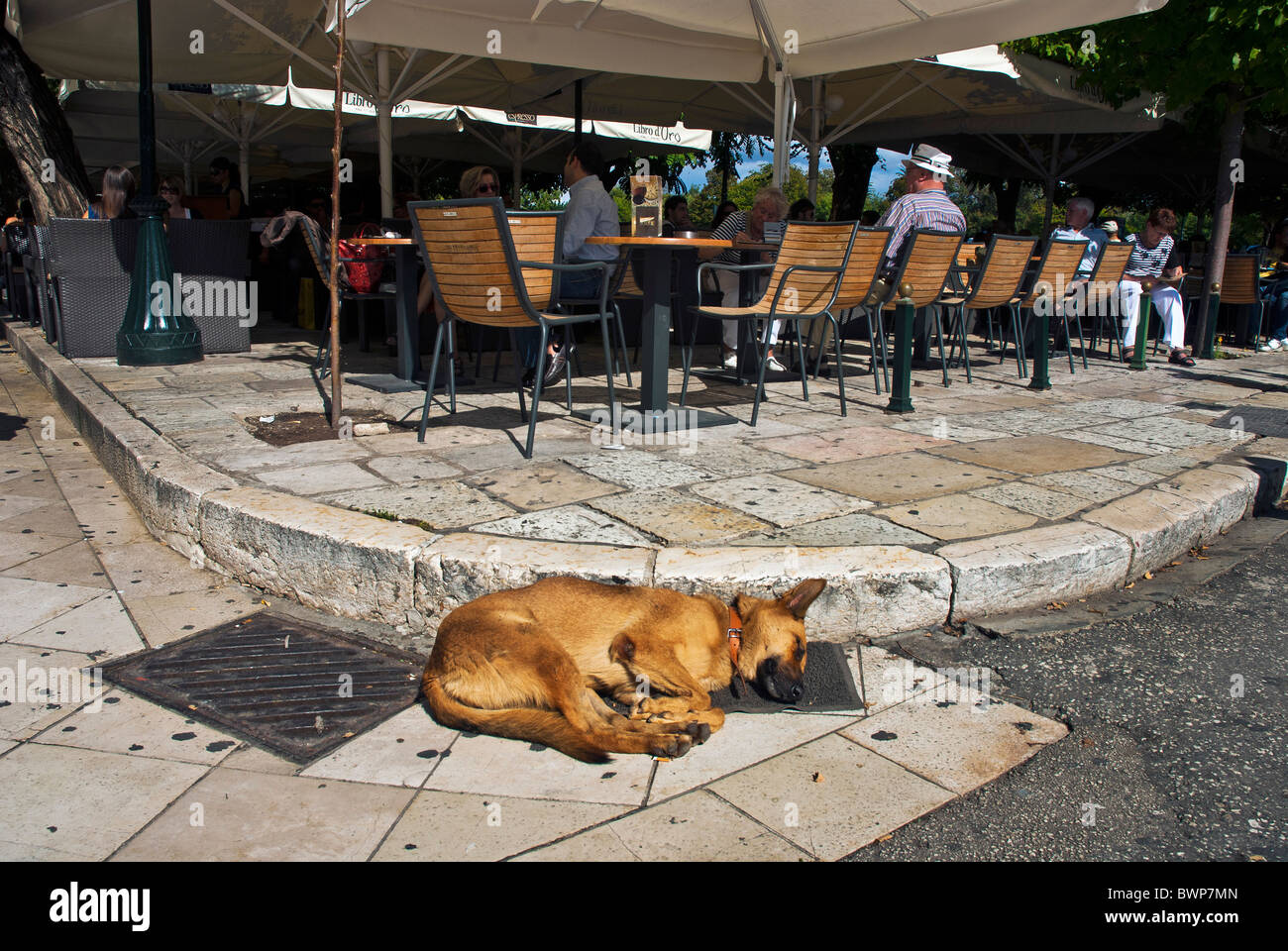 Sleeping Dog in Corfu Town, Ionian Islands Greece. - Stock Image