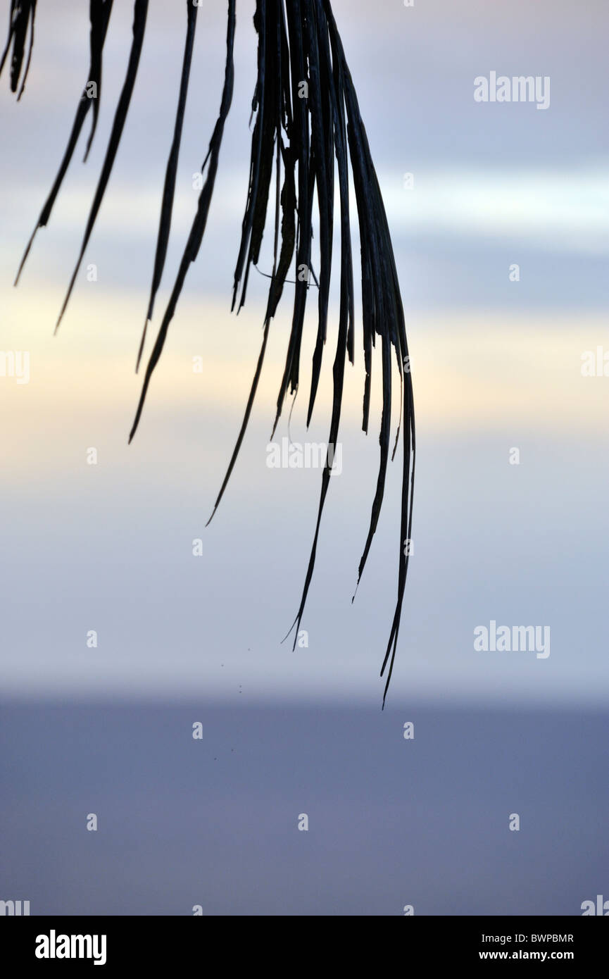 THe fronds of a palm tree with the South China Sea in the background. - Stock Image