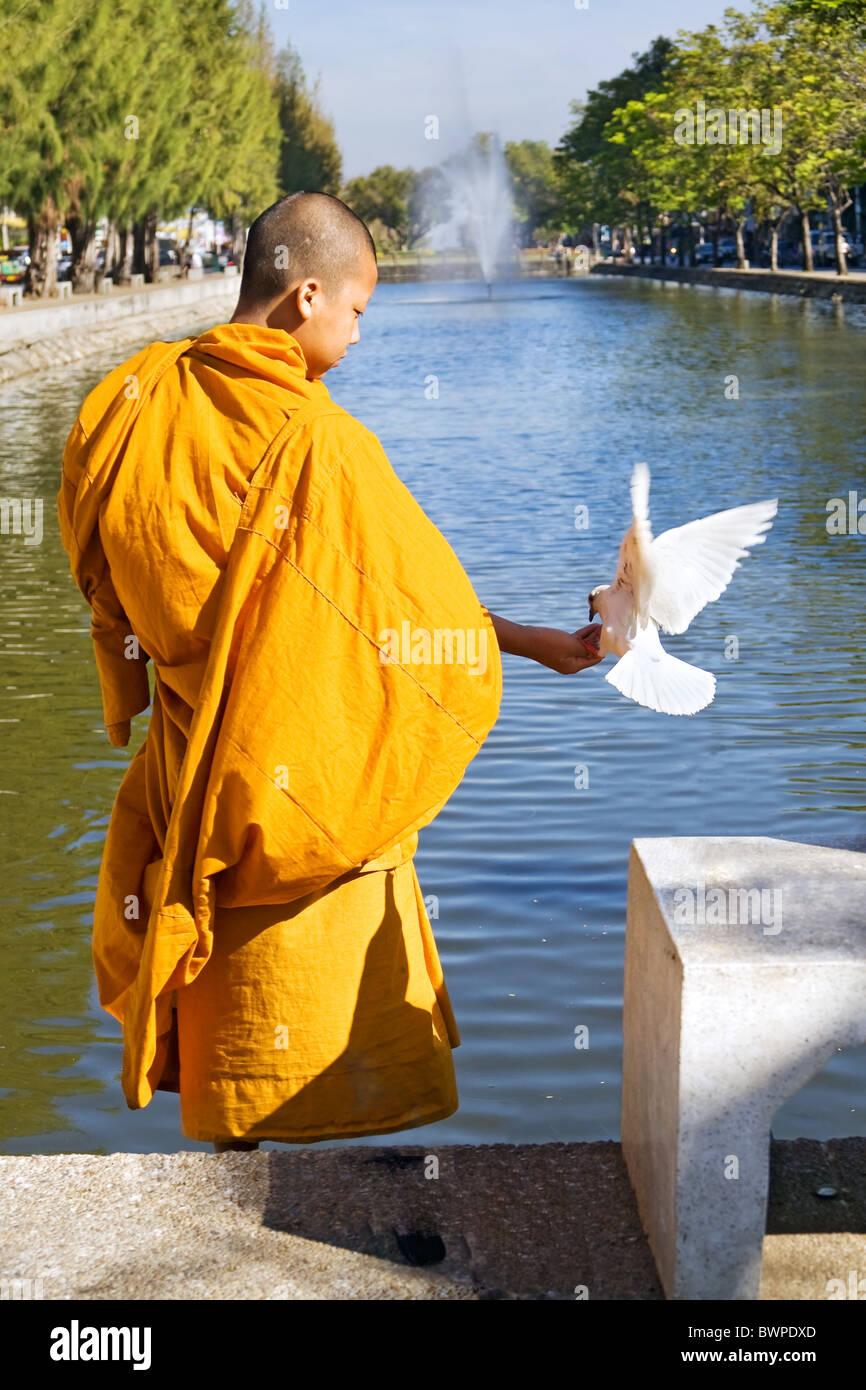 Bird Pigeon Symbol Religion Peace Thailand Stock Photos