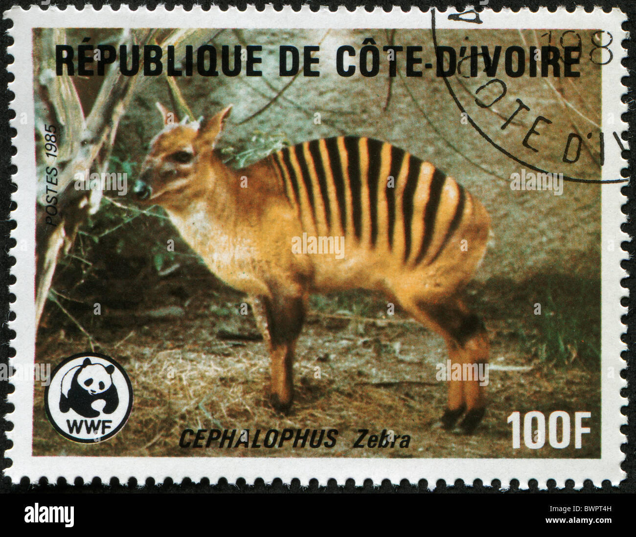 COTE D'IVOIRE - CIRCA 1985: A stamp printed in Republic Cote d'Ivoire shows Zebra Duiker -Cephalophus Zebra, circa Stock Photo