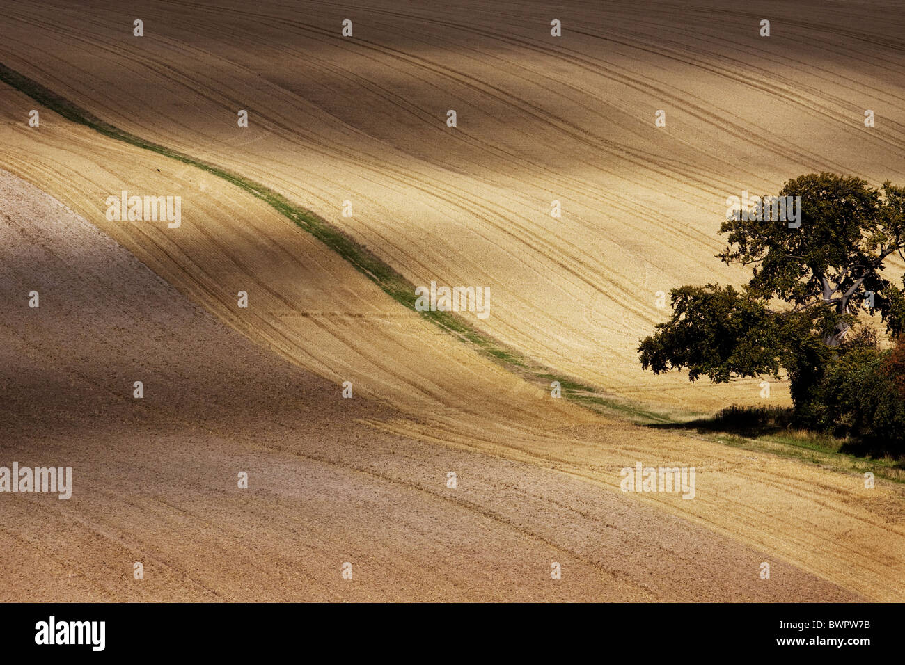 Downland curves field shapes rolling - Stock Image