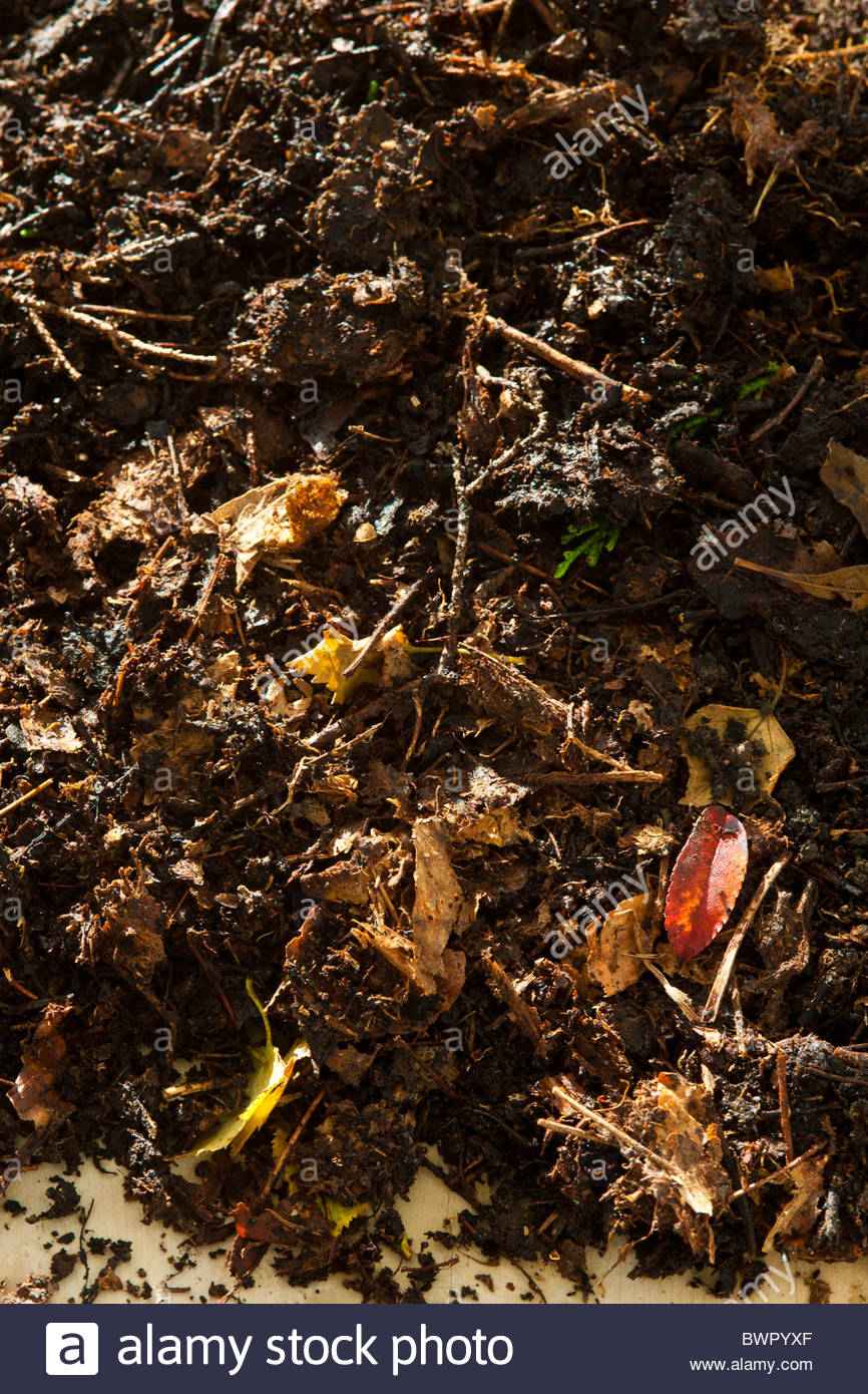 leaf mould garden practical mulch soil conditioner well rotted organic natural home made product ready to use - Stock Image