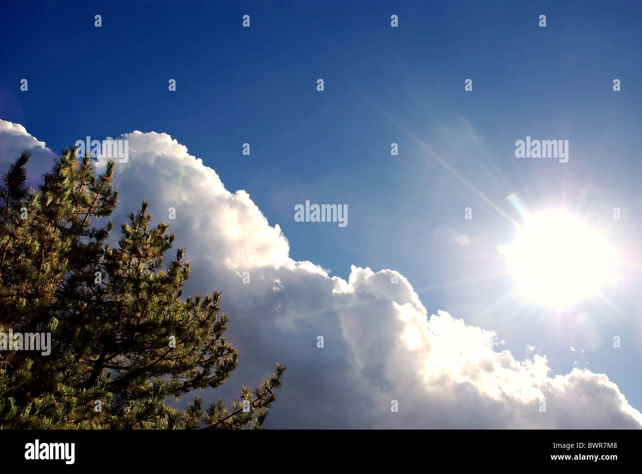 Pine tree, fluffy clouds and the sun with copy space Stock Photo