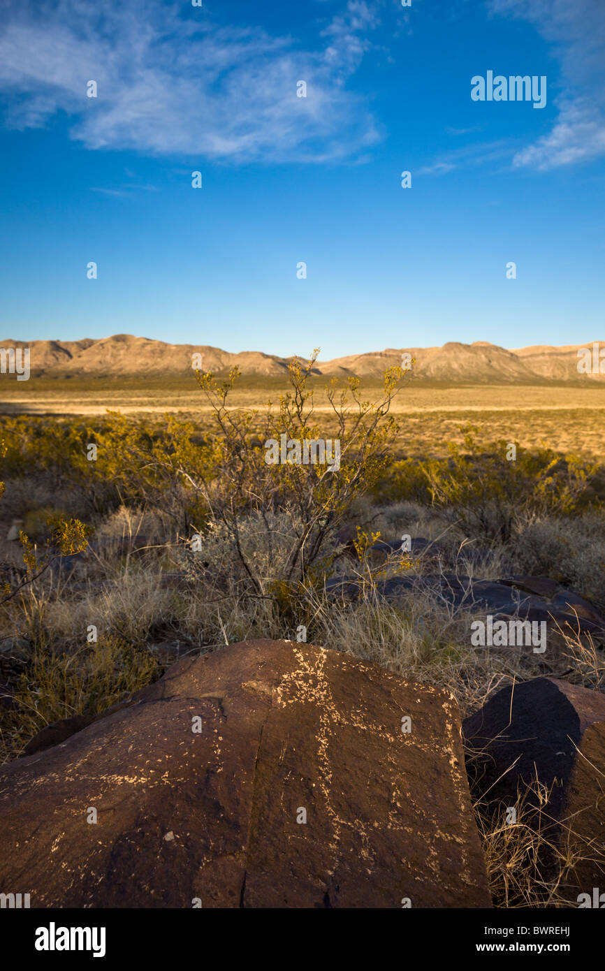 Petroglyph of animal quadruped carved by the Jornada Mogollon at the Three Rivers Petroglyph Site, New Mexico USA. Stock Photo