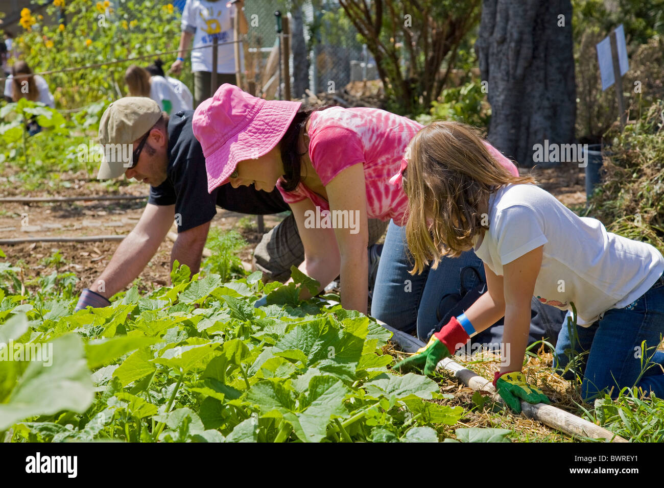 Students, parents and teachers work on the garden at the 24th Street School garden on Big Sunday. West Adams, Los - Stock Image