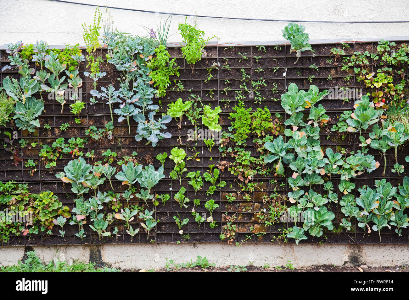 the edible garden wall vertical garden created by urban farming for the weingart center - Garden Wall