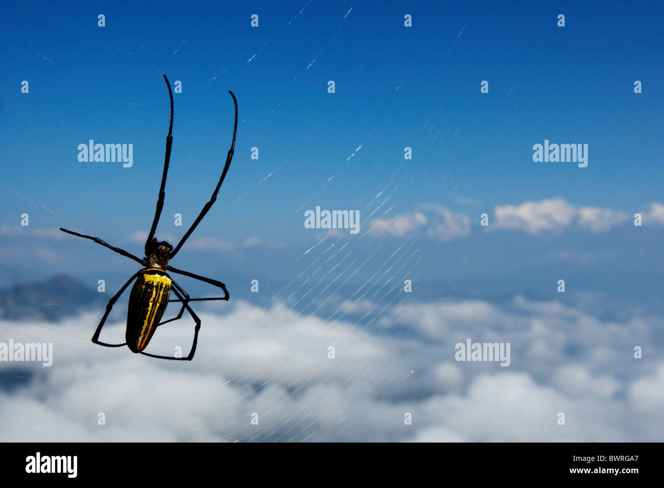 A large spider weaves its web against a view of the Himalayas seen from Bandipur, Nepal on Friday October 30, 2009. - Stock Image
